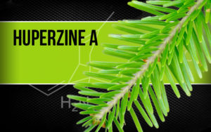 hyperzine-a-a-natural-healthe-a-wonderful-life